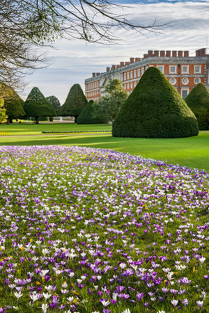 Hampton Court Palace,Andy Butler,The Great Fountain Garden and East Front in spring, with rows of yew trees and a carpet of iris in the foreground