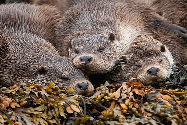 © SCOTLAND: The Big Picture / naturepl.com