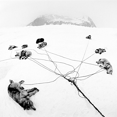 Inuit sled dogs resting. Second Prize in the Nature category of the Spider Black and White Photography Competition 2015 ©Pal Hermansen / naturepl.com