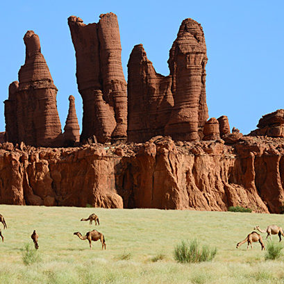 Eroded sandstone rock formations with Dromedary camels (Camelus dromedarius) grazing on new grass after desert rains. Ennedi Natural And Cultural Reserve, UNESCO World Heritage Site, Chad. September 2019.
